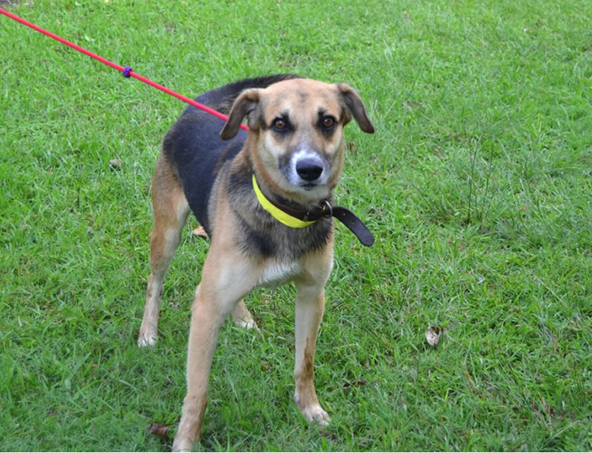Dogs For Adoption At Spca Durban