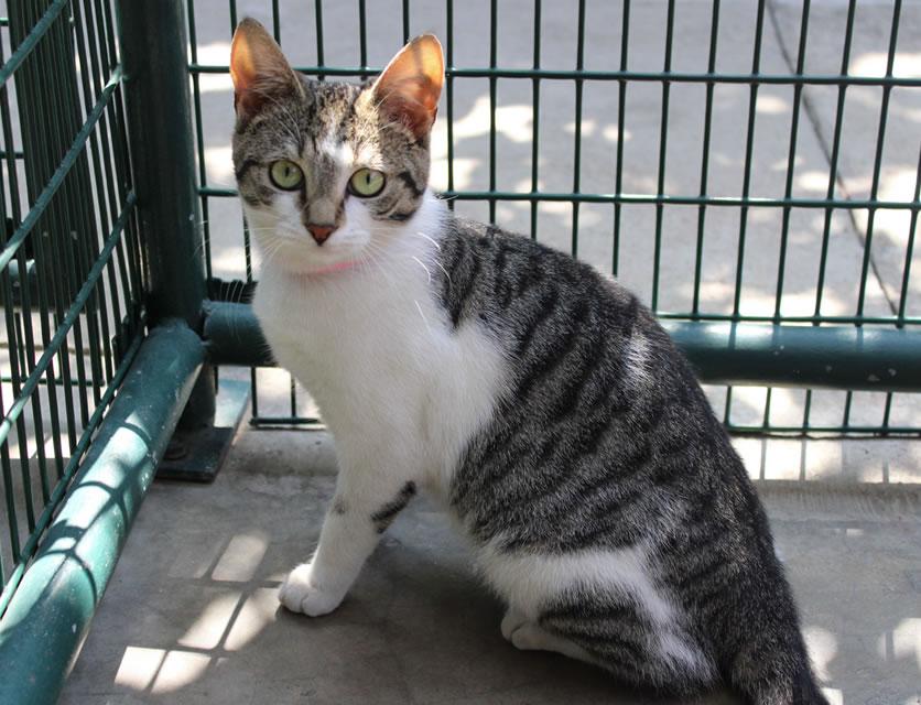 7c8a8bb30 SPCA Durban & Coast | Adopt a dog or cat