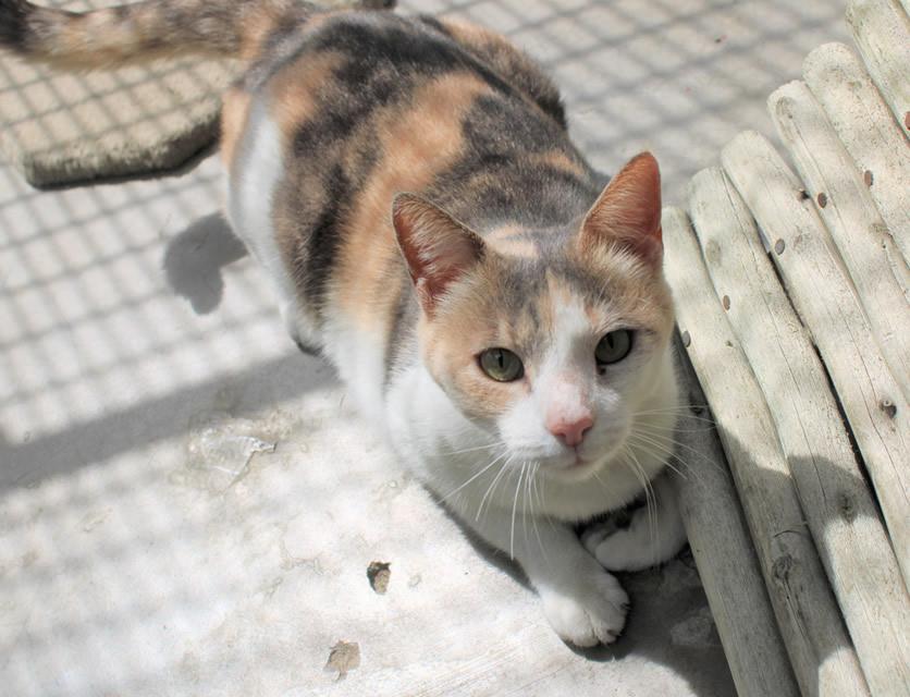 Spca Durban Coast Adopt A Dog Or Cat