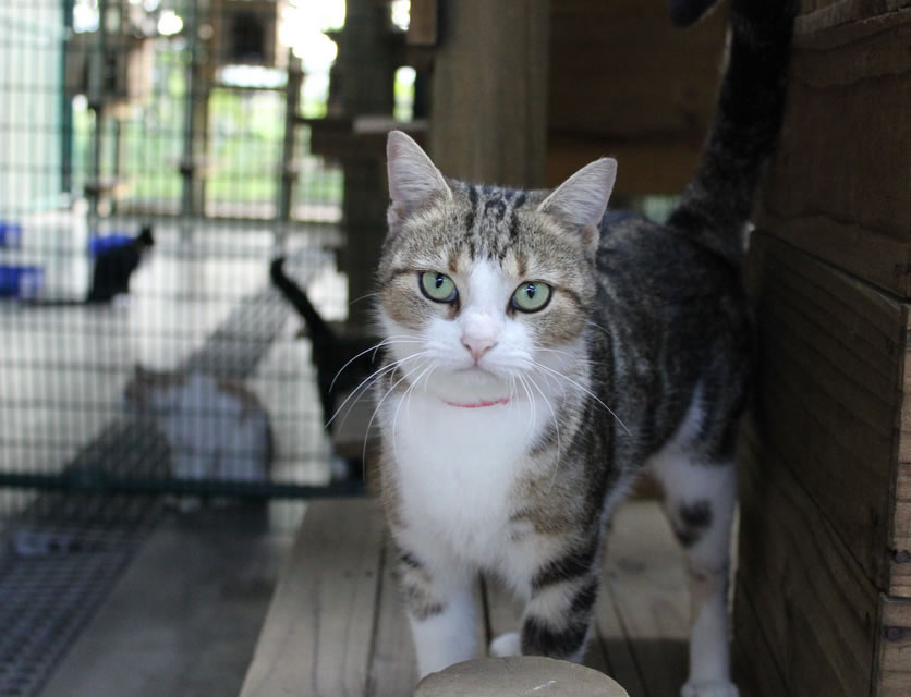 SPCA Durban & Coast | Adopt a dog or cat